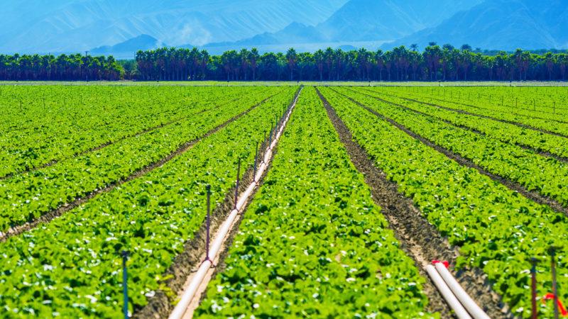 Growing vegetables are trending in hillside