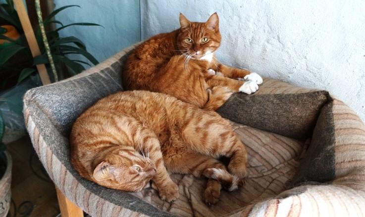 Рыжие коты понесли наказание