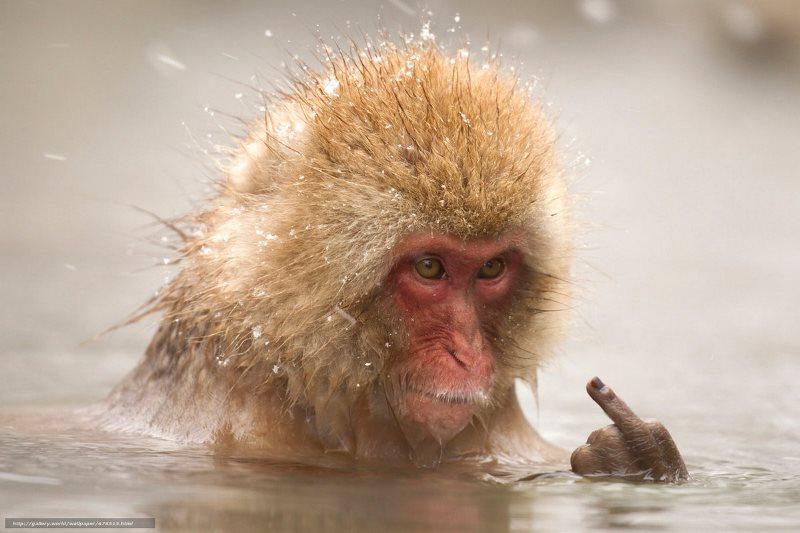 Российские выборы показывают, что мы – глупее обезьян