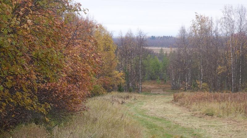 В Архангельской области начнут раздавать «арктические гектары»