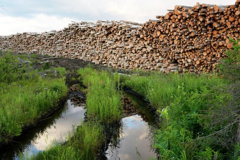Подрядчик «Титана» рубил лес в Двинско-Пинежском заказнике