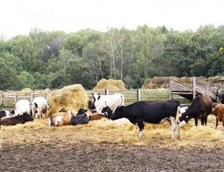 Фермер из Архангельской области пойдёт под суд за растрату гранта в 12 миллионов рублей