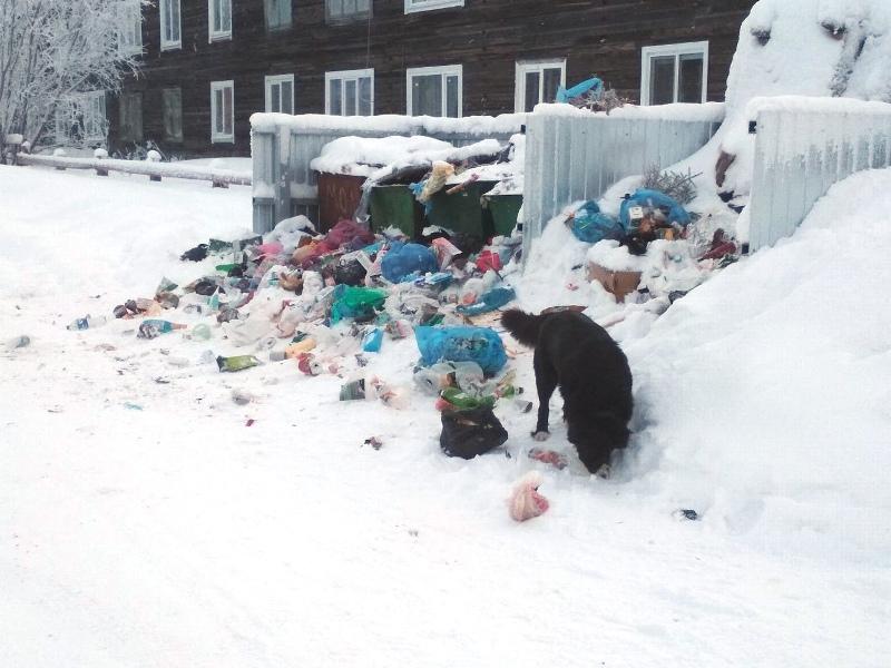 В Лешуконском не вывозят мусор. Губернатор в Архангельске собирает международную конференцию