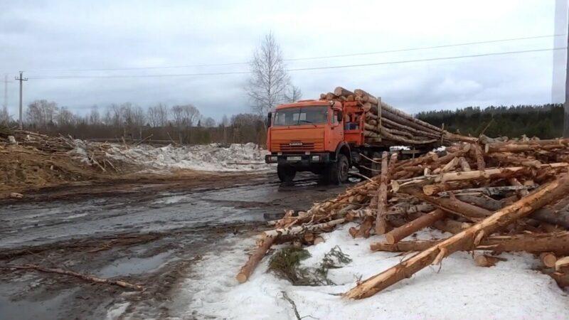 Малому лесному бизнесу в Архангельской области готовят каюк