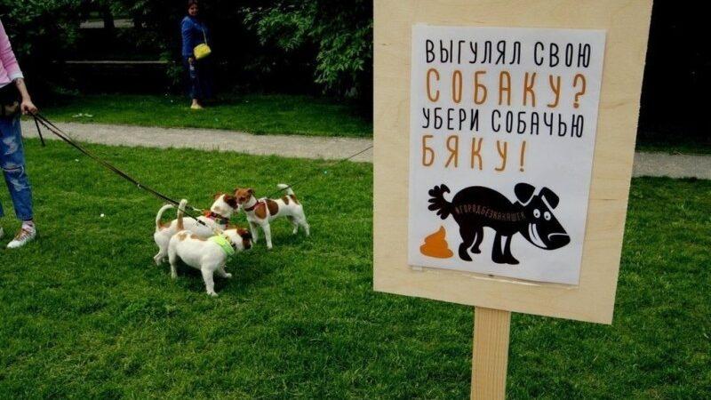 Выгуливать собак можно у мэрии Архангельска