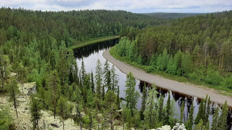 Бесценные леса Поморья вычеркнуты из списка